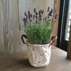 ラベンダー:紫穂