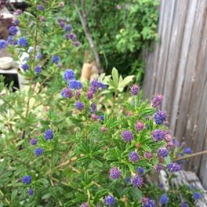春のnohana-garden '16-①
