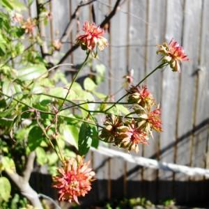 冬のnohana-garden'17