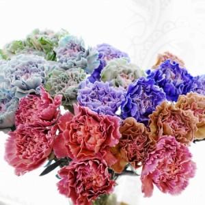 輸入切り花の展示会