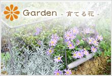 季節を彩る草花や宿根草、観葉植物、多肉植物、庭木やシンボルツリーの相談など…