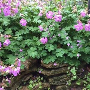 春のnohana-garden '16-②