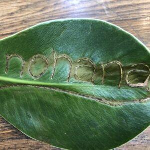 植物入荷情報